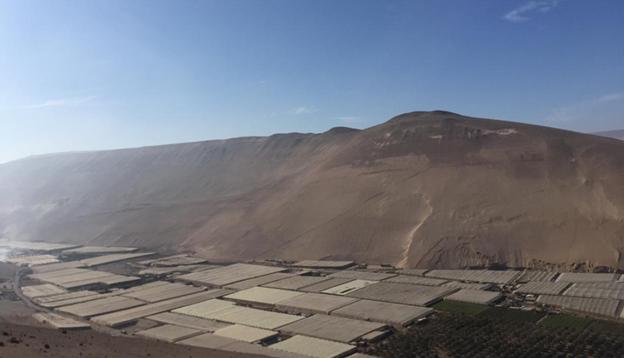 Bedekte tomatenteelt in Arica