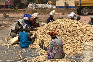 Kennis versterkt klimaatweerbaarheid West-Afrika