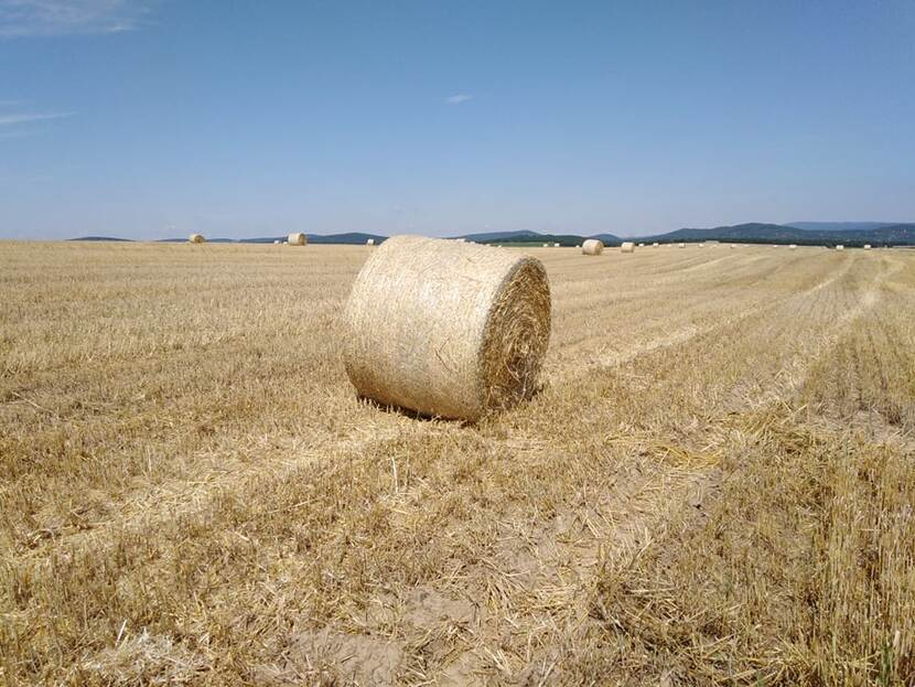 Rolls of hay on a freshly harvested field