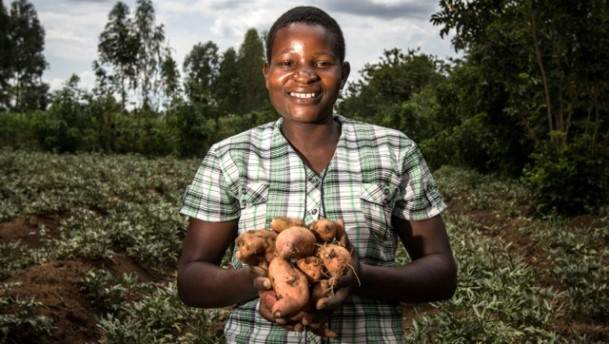 Aardappelketen