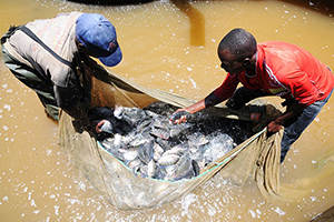 Duurzame visteelt in Kenia
