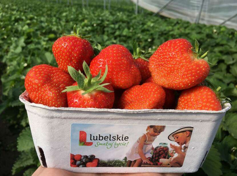 strawberries from Lubelskie region