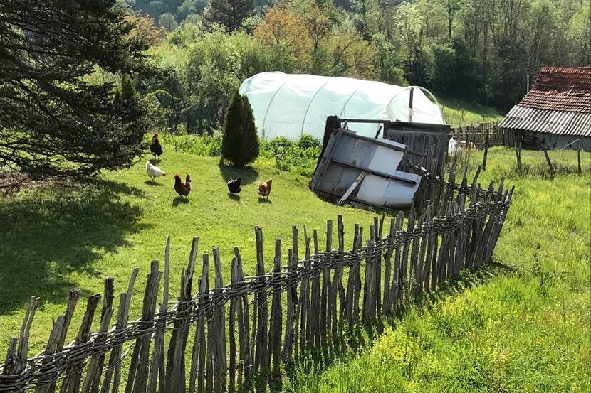 Chickens are seen grazing in a garden separated by a wooden fence in a rural mountain village in Serbia.