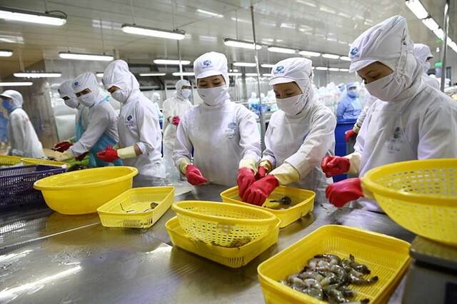 Seafood processing lines in Minh Phu