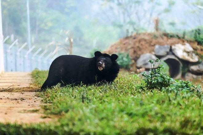 Three bears are re-released in Ninh Binh
