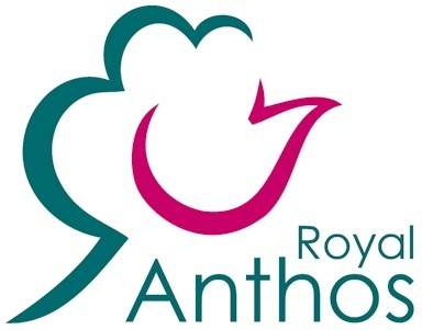 Royal Anthos