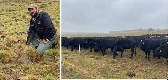 Visionary farmer Danie Slabbert (near Reitz) and his ultra-high density grazing system improving soil health, biodiversity, grass quality (veld quality) and income.